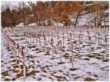 Field of Crosses