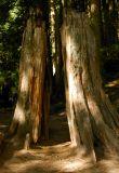 Lynn Canyon Park 2
