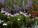 Flutterby Garden
