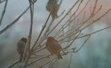 between dreams and waking...