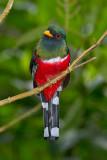 ECUADOR: Birds