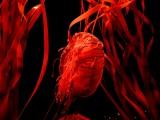 méduse rouge