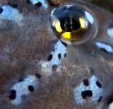 L'oeil jaune du poisson