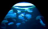 Aquarium à méduses