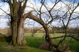 22nd April 2013  lightning tree