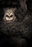gorilla 4-2.jpg