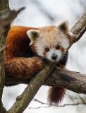 90 minutes at The Washington National Zoo