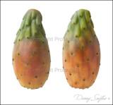 Cactus Pears.jpg