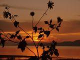 A Utah sunset through the eyes of Helianthella uniflora (little sunflower)