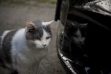 Kiki_car1.jpg