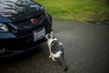 Kiki_car2.jpg