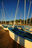The Fleet - Castine Yacht Club