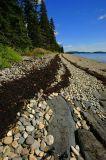 Seaweed Path - Private Island
