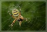spinnen__spiders