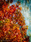 Visions of Autumn