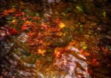 Colours in a Stream
