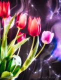Starry Starry Tulips