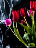 Smoke Tulips
