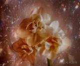 Cosmic Dreams