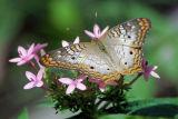 Butterfly - Tulsa Zoo