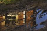 reflection web.jpg