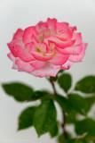 2013_04_28_17_15_50_NIKON-D800_16643_WEB.jpg