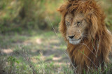 African Wildlife Dec 2012