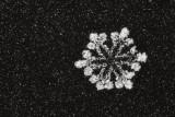 snowflake (IMG_2404ok.jpg)