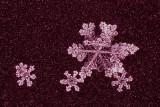 snowflake (IMG_2438ok.jpg)