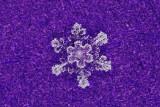 snowflake (IMG_2505ok1.jpg)
