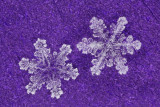 snowflake (IMG_2533ok.jpg)