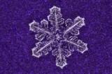 snowflake (IMG_2520ok.jpg)