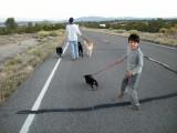 Dog walking with Landy