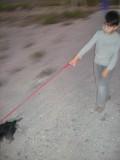 More dog walking