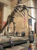 The Barosaurus at the Natural History museum