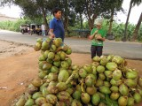 Can never have enough coconuts