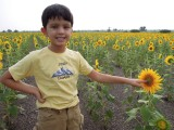 In one of the countless sunflower fields we passed in Karnataka