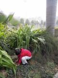 Burying a pet parakeet