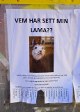 Lama Lost in Stockholm