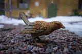 The iron bird