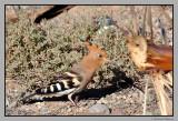 Meloneras birds # 2