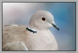 Our hotel dove
