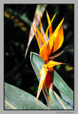 Flowers; Palmitos park
