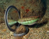 Slippery Dick with an Oedipus Complex