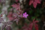 Fiore di Novembre