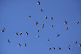 The resident birds sure put on a show for us that Sunday.