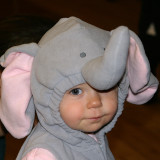The Littlest Elephant