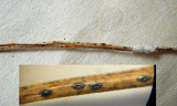 Lophodermium pinastri on needle litter HaywoodOaks Mar-10 HW
