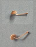 Mycena stylobates Bonnet Willow AttenboroughNR 3-12-06 RR