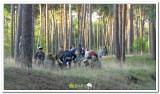 kasterlee_2011_kamp_2_163_20120419_1220610844.jpg